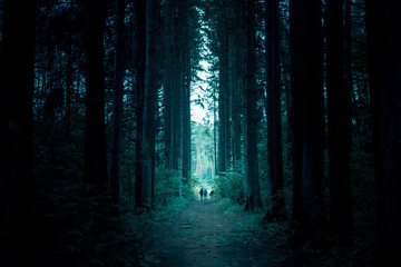 Pathway through the dark mystery spruce forest. Group of people are walking through.