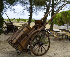 Traditional horse carriage or donkey used in the Apulian countryside by farmers up to the 20th century. Puglia - Italy