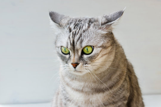 Portrait of surprised cat on white background