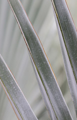 Grey palm leaf abstract