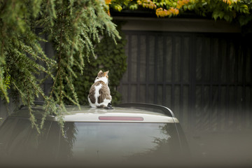 Cat sits on car rooftop. Image seen through window glass.