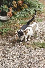 Two cats walk cheek to cheek in fall garden