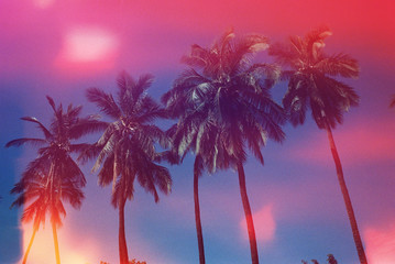 pink and blue palm trees