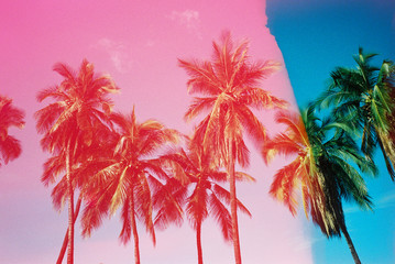 pink and blue palm trees on film