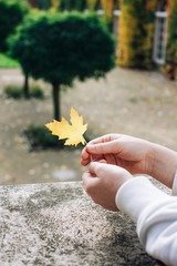 Closeup of Female Hands Holding Yellow Fall Leaf