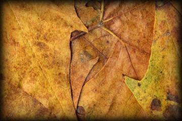 Autumn Foliage Background Vignetted Grunge Texture
