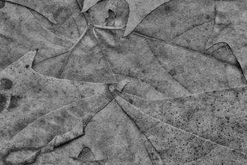 Black Autumn Foliage Background Grunge Texture