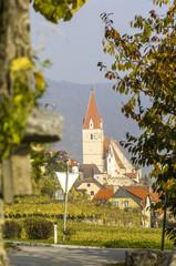 Wachau, Weissenkirchen, herbstlicher Weingarten, Österreich, Ni