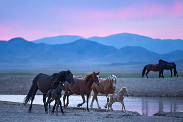 Wild horses at watering hole at dusk