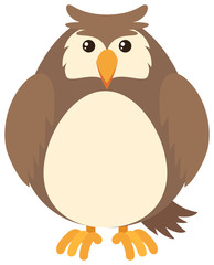Brown owl on white background