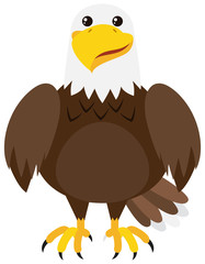 Brown eagle on white background