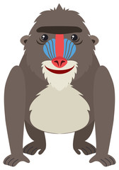 Mandrill baboon on white background