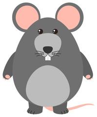 Gray rat on white background