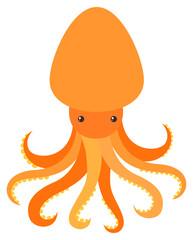 Orange octopus on white background