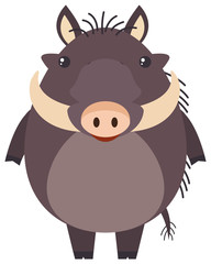 Wild pig on white background
