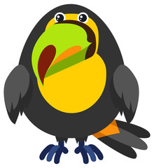 Toucan bird on white background