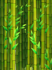 Seamless background with green bamboo
