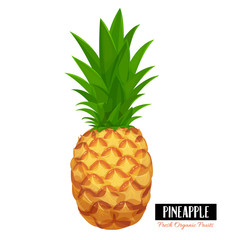 Vector pineapple.