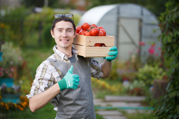 Smiling man with tomato harvest