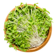 Mizuna sprouts in wooden bowl. Cotyledons of Brassica juncea japonica. Also Japanese mustard greens, kyona or spider mustard. Vegetable. Microgreen. Macro food photo close up from above over white.