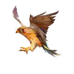 Fototapete - drawn isolated flying Falcon bird
