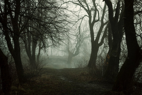 Scary forest in fog