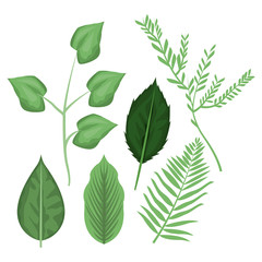 white background with different types leaves and branches vector illustration