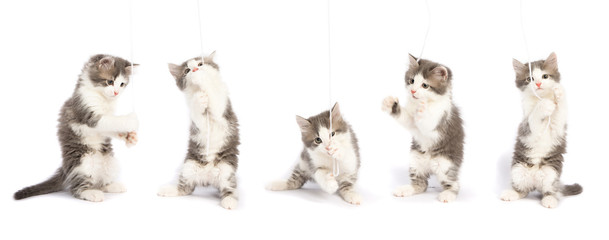 cute kitten is played. set of kittens on white background