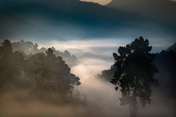 Nature and beautiful mist in the morning.