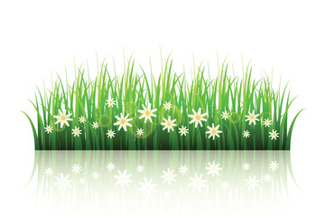 Green grass with flowers isolated on white background . Spring vector template .