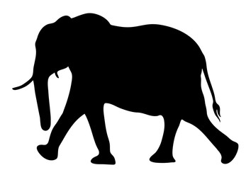 View on the silhouette of an african elephant - digitally hand drawn vector illustration