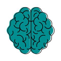 human brain topview  icon image vector illustration design  blue color