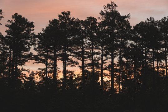 Sunrise through the trees in Arkansas