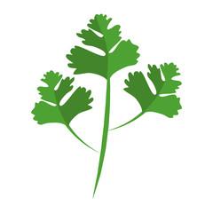 Fototapeta coriander leaves icon over white background vector illustration obraz