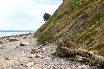 umgestürzter Baum an der Steilküste zwischen Niendorf an der Ostsee und Travemünde