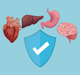 color background with organs human body and shield healthy symbol vector illustration