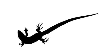 Silhouette of a lizard that creeps. Vector Illustration.