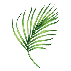 Watercolor painting coconut, palm leaf,green leave isolated on white background.Watercolor hand painted illustration tropical exotic leaf for wallpaper vintage Hawaii style pattern.With clipping path.