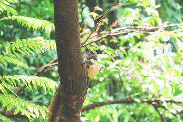 Foto auf AluDibond Straus Squirrels eat a fruit on tree