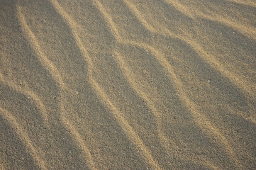 Ripples in the sand, on Midway Island, Northwestern Hawaiian Islands