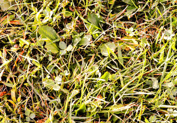 Green Grass Pattern Texture