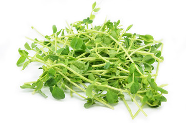 Bunch of pea shoots