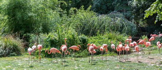 flamingos in a park