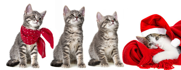 cute kittens isolated on a white background