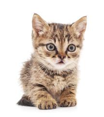 Little kitten.