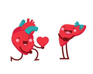 Healthy Happy And Cute Human Anatomy Illustration Cartoon - Healthy Romantic Heart Giving Out Love To Liver