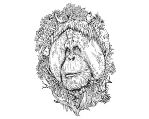 Vintage Detail Realistic Hand Drawing Save Protected Animal Forest Concept - Orangutan