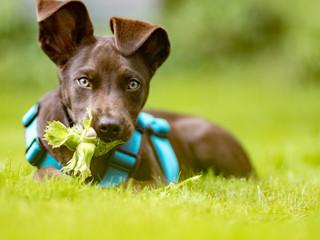 Nüsse können für Hunde gefährlich werden