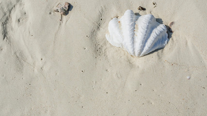 White giant clam shell on smooth sandy beach.