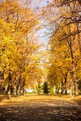 Park covered in fallen leaves, autumn scene